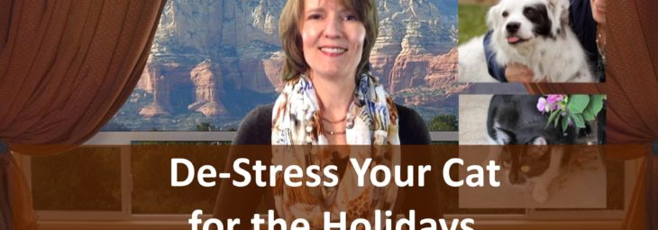 De-Stress your cat for the holidays!